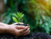 صورة , التربة , الزراعة , يد , أهمية التربة