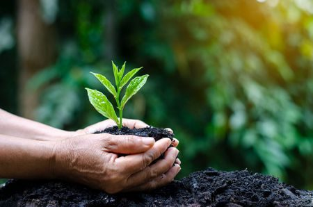 صورة , التربة , الزراعة , يد , الطين
