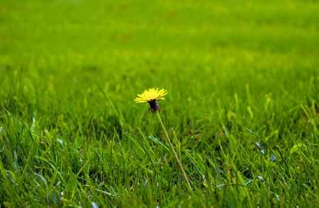 حساسية الربيع , الحساسية , صورة