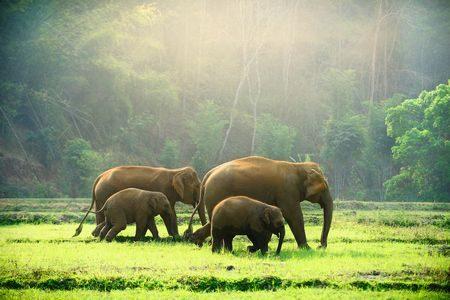 صورة , تايلاند , الفيلة , السياحة