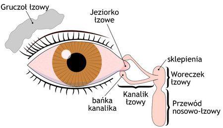 القناة الدمعية , العين , صورة