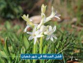 فضل الصدقة في شهر شعبان , The virtues of Shaban