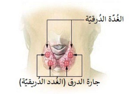 الغدة, الدرقية,صورة,Thyroid