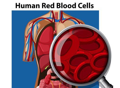 صورة , الاوعية الدموية , الشرايين