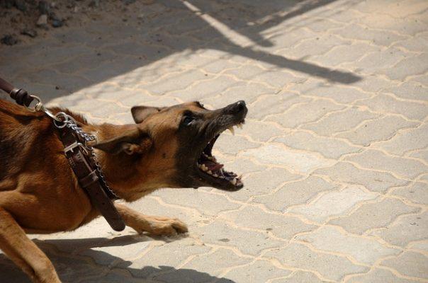 كلب،حيوان،صورة