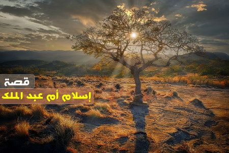 قصة, إسلام, أم عبد الملك, المرأة الأمريكية