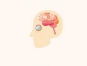 الدماغ،صورة،الإنسان