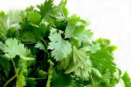 الكزبرة الخضراء ، إنقاص الوزن ، الفيتامينات ، إرتفاع ضغط الدم ، تشوهات الأجنة ، رائحة الفم