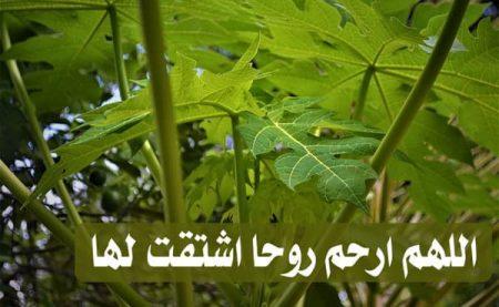 اللهم ارحم روحا اشتقت لها