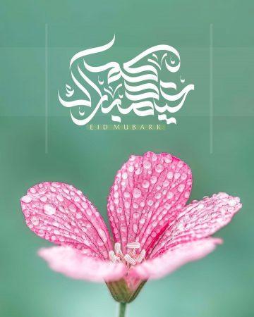 خلفية واتس آب مكتوب عليها عيد مبارك