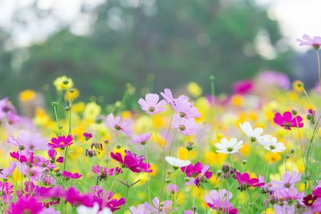 قصة قصيرة , أهمية الأزهار , النبات, flower field , flowers , صورة