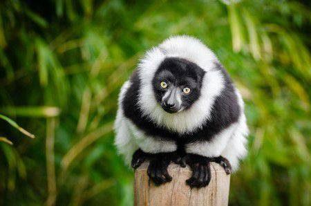 مدغشقر ، السياحة ، رانما فانا ، حديقة ماسالا ، هيل الملكي ، إيفاتي ، شارع بويابس ، فضولي كن