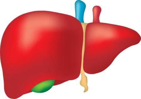 اليرقان ، الكبد ، الصفراء ، العصارة الصفراوية ، البروتينات ، ممارسة الرياضة ، الكحوليات