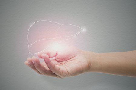 وظائف الكبد , liver functions , صورة