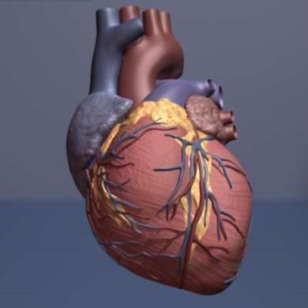 القلب ، أمراض القلب ، زراعة القلب ، قصور عضلة القلب