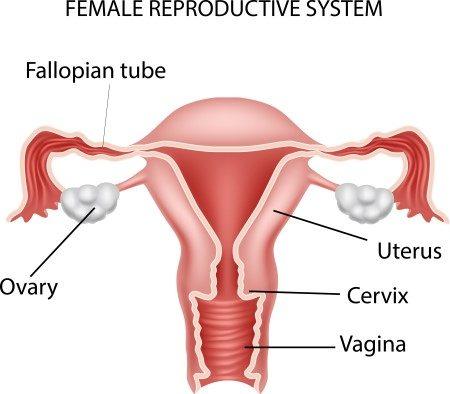 سرطان عنق الرحم ، السرطانات ، مسحة عنق الرحم ، الأورام السرطانية