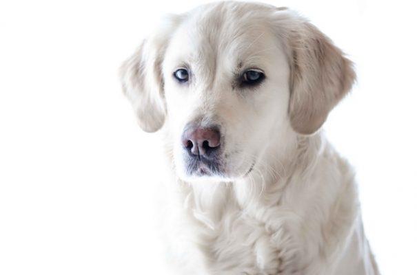 دواء الكلاب،دواء الكلب،صورة،كلب